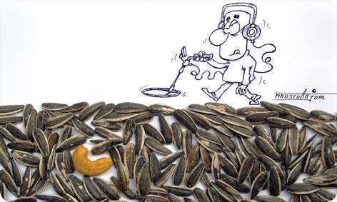 در جستجوی بادوم هندی در بین تخمهها
