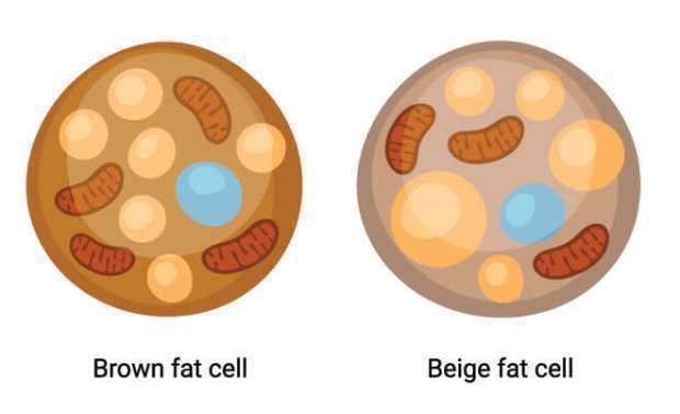 واقعیتهایی که باید در خصوص چربیهای بدن بدانید