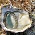 huître crue