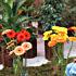 نمايشگاه گل و گياه در محلات