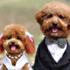 آلبوم عروسی،سگ