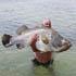 صید ماهی های غول پیکر