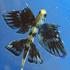 ماهی های پرنده