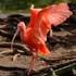 پرندوں اور جانوروں کي خوبصورت دنيا