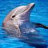 دلفين هاي بازيگوش