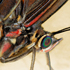 حشرات از نماي نزديک