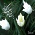 ئیمام مووسا کازم(ع)