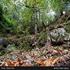 دارستانی لوندویل لە گیلان