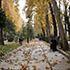 تہران میں پت جھڑ کی تصویریں